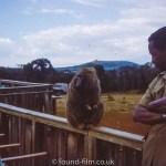 Baboon at Safari park