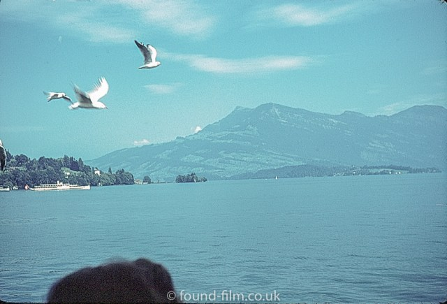 Swiss photos - Birds at the lake