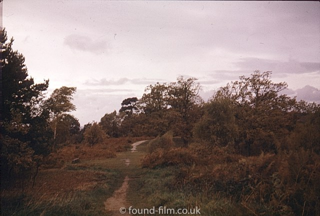 The look of Ilford film - path in the evening