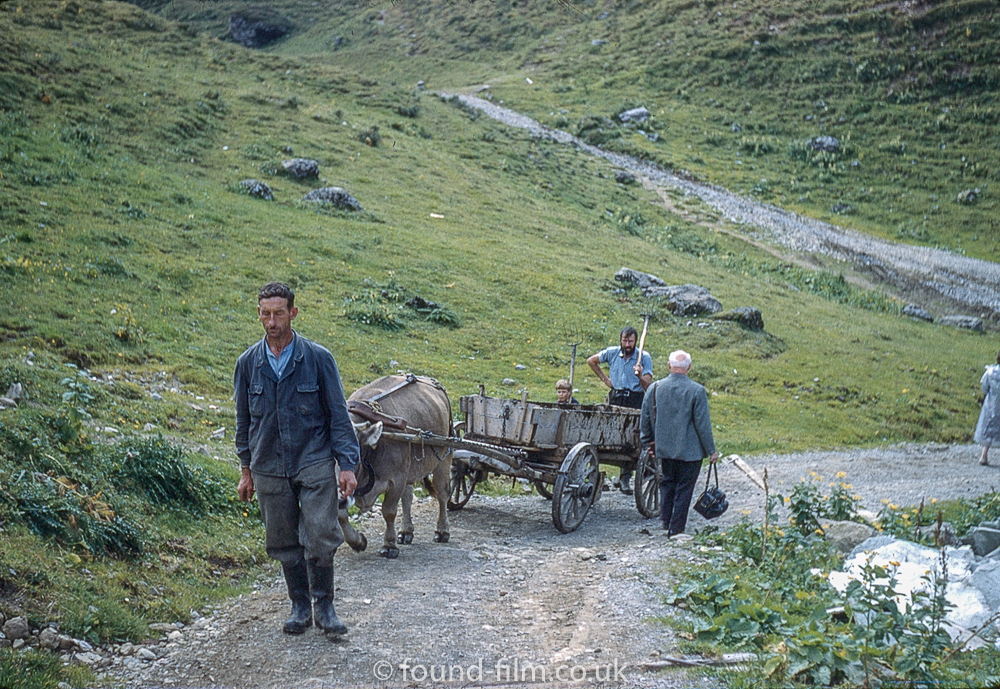 A man on a mountain path leading a cart pulled by a cow