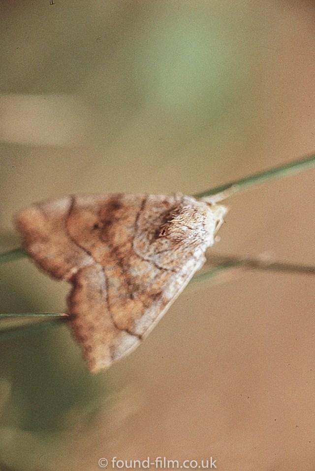 Macro photos on film - Small Moth