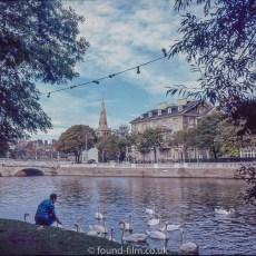 Woman feeding Swans on a river