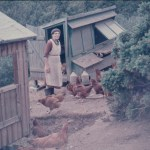 A photo of a lady in a garden surrounded by chickens with an open chicken hutch in the background