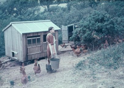 Woman looking after chickens c1955