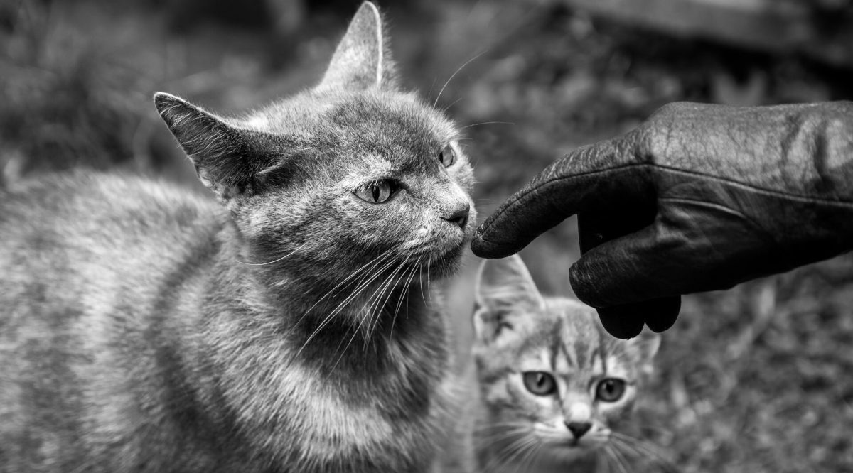 finger pointing at cats