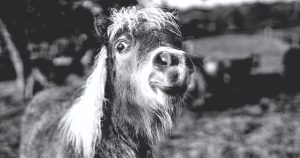 A donkey looking at you
