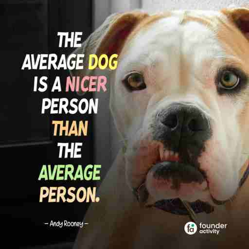 The average dog is a nicer person than the average person. -Andy Rooney-