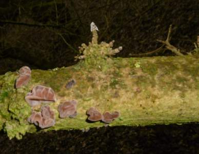 Tree Fungus in Epping Forest