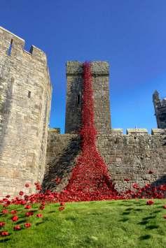 caernarfon-castle-poppies-in-wales-7