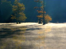 thick mist