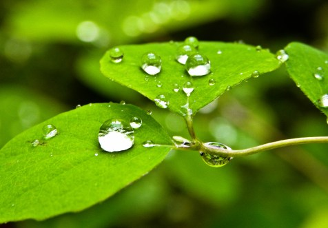 green and raindrops