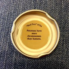 day 10 snapple top