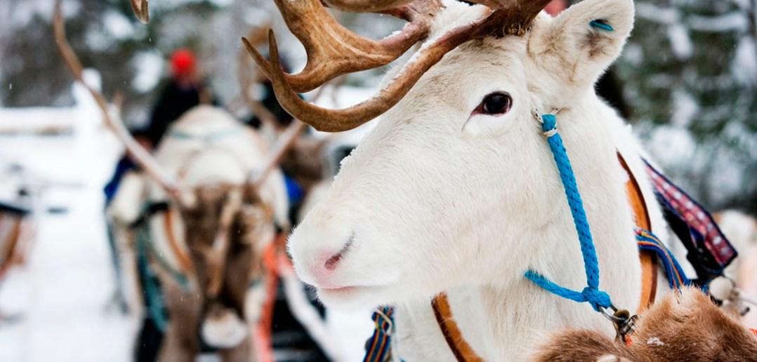 Зимний и летний отдых в Лапландии