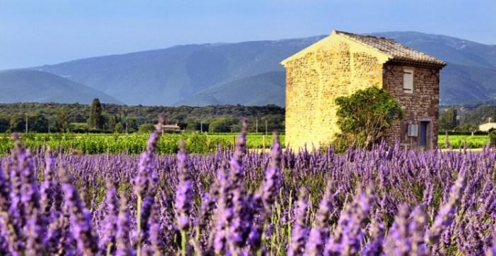 Лавандовые поля Прованса - плато Валенсоль