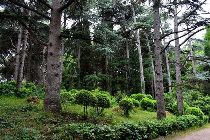 Дворец княгини Гагариной окружает парк «Утес»