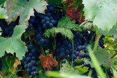 Экскурсии из Будапешта: винный регион Эгер