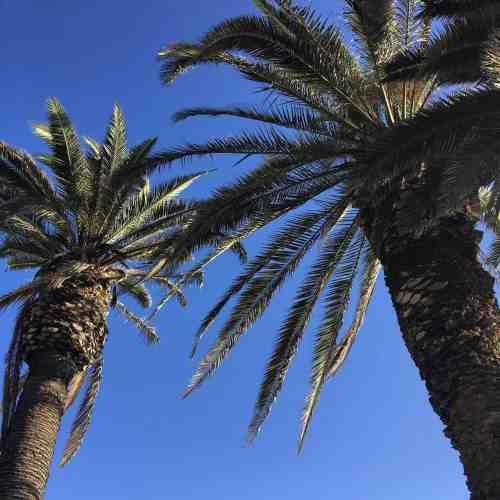 Anaheim City Guide