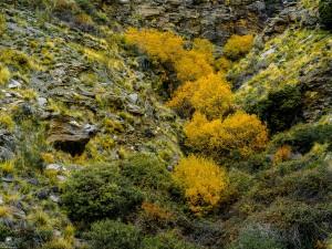 Sierra de los Filabres, Spain