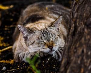 Waikoloa feral cats (21 of 22)