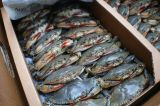 Fresh crabs, Charleston, South Carolina