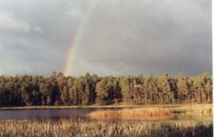 woodlandrainbow