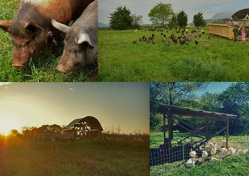 four-corners-farm_our-animals