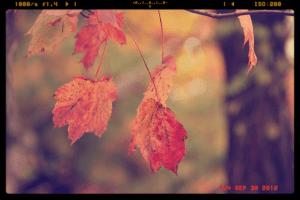 Hanging_Leaf