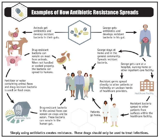 The Advent Of Resistance To Antibiotics Research Paper Service