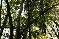X tree 2