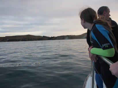 suited up and waiting for dolphins