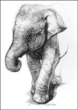 animal easy drawings draw
