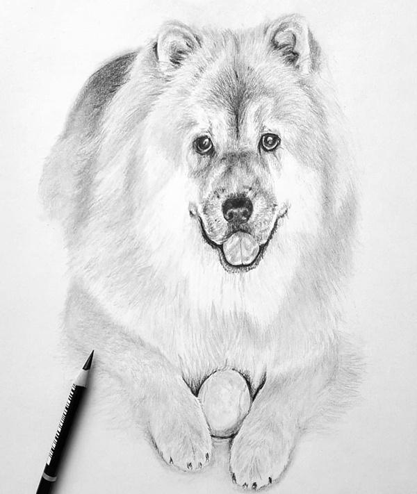 Dog Drawing Ideas Animals Easy Novocom Top