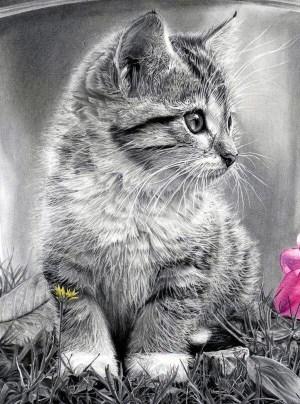 animal drawings easy draw cartoon