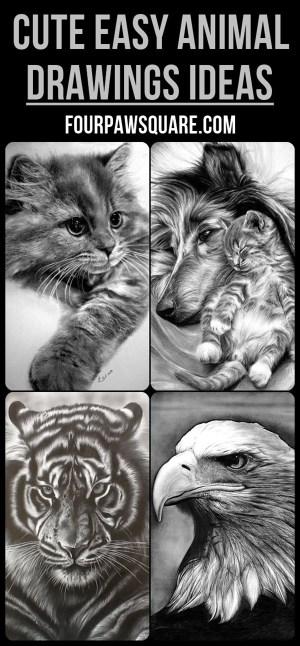 drawings easy animal
