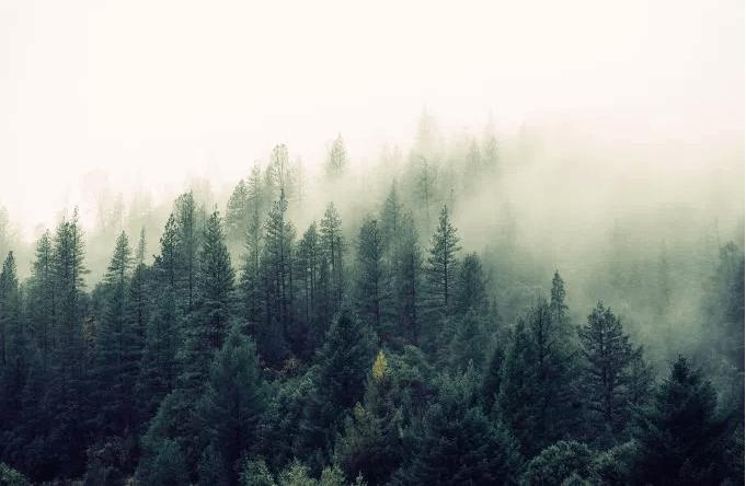 foggyForest
