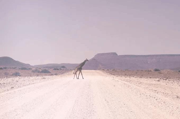 giraffeRoad.PNG