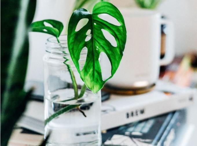greenPlantWater.JPG