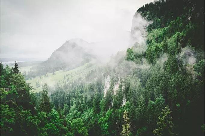 treeGreenForest.JPG