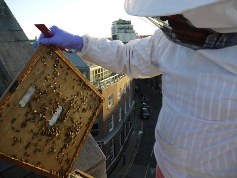 Bermondsey Bees Apiary