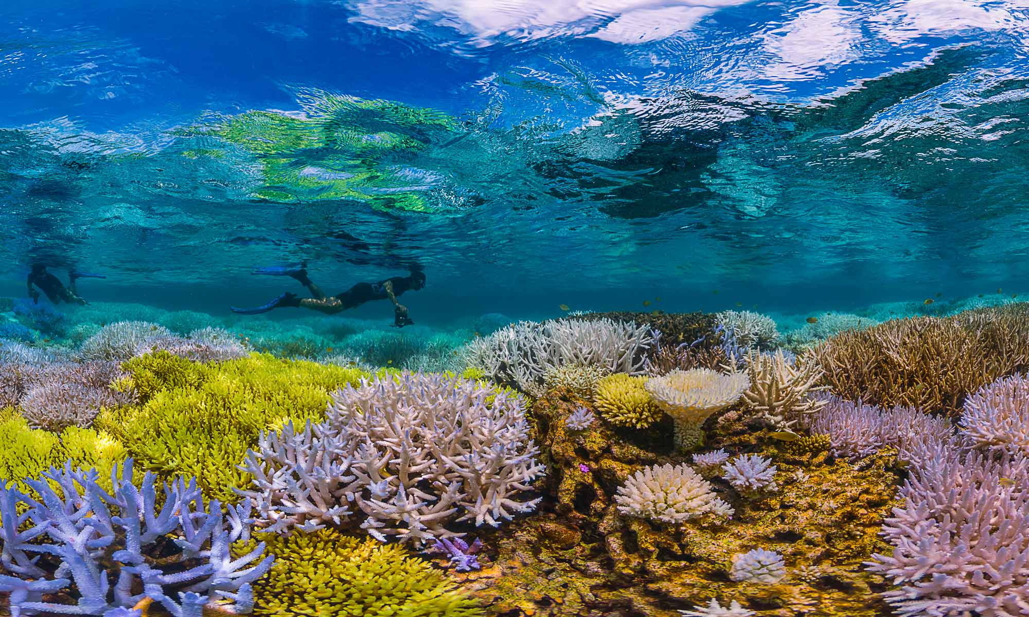 Get Glowing With Coral Reef Conservation