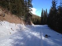 Bonnie on snowy road