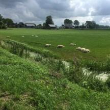 Schappen en boerderij, Oosterwierum, Friesland