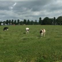 kooien en huizen, Oosterwierum, Friesland