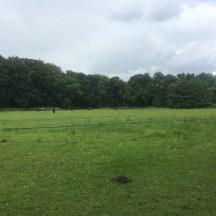 paarden in veld