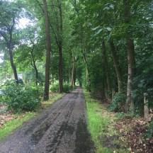 weg in bos