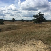 gras, zand en bomen in de Veluwe
