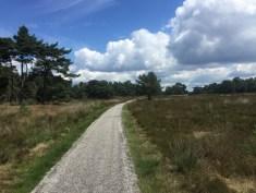 bomen en gras langs fiets- wandelpad Veluwe