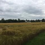 boerderij, Meerlo, Limburg