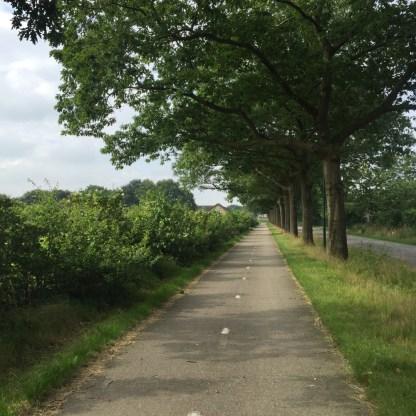 bomen en gewas langs fietspag