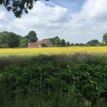 veld met gele wilde bloemen met rand van paarse bloemen
